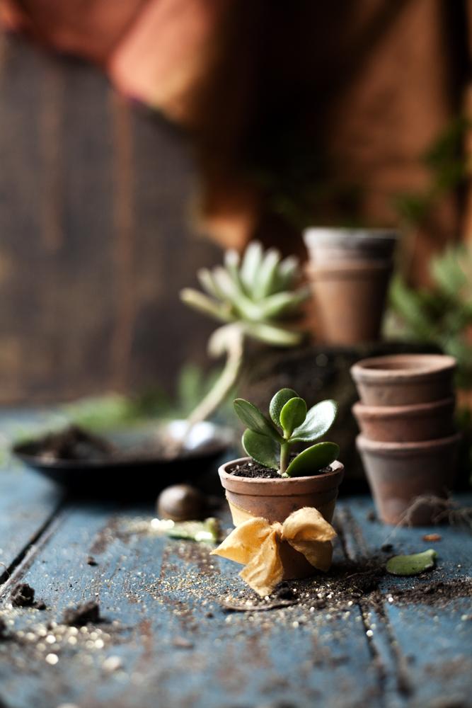 PiaJaneBijkerk_happinez_2016_gardening_IMG_4598.jpg