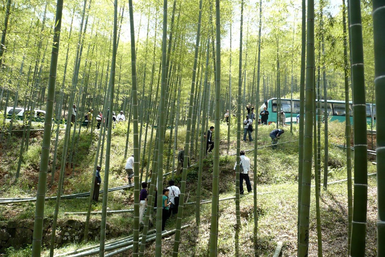 2010 bamboo.jpg