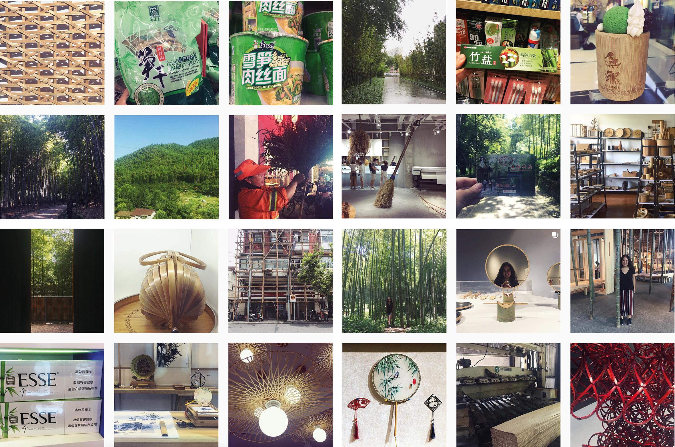 bambuenchina.jpg