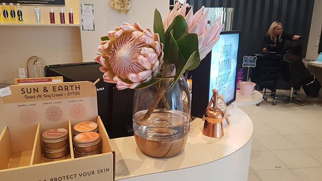 Couldn't help but buy theses beautiful protea flowers while popping into @coogee_continental_deli for the best chai latte 😍😍🌺🌻🌼☕☕☕ #newleafdayspa #bibralake #proteaflower #chai #chaitealatte #coogeecontinentaldeli #perthwa #perthfridays #loveflowers #coogeeperth #coogeecafe