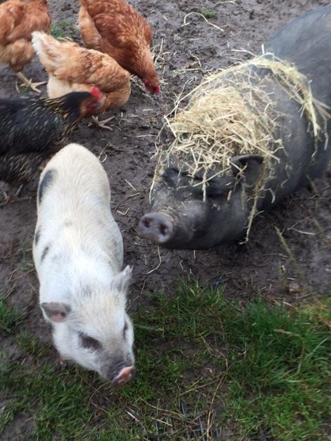 Kokerelle B&B in Oudenaarde with Elsa (black) and Olga (white).
