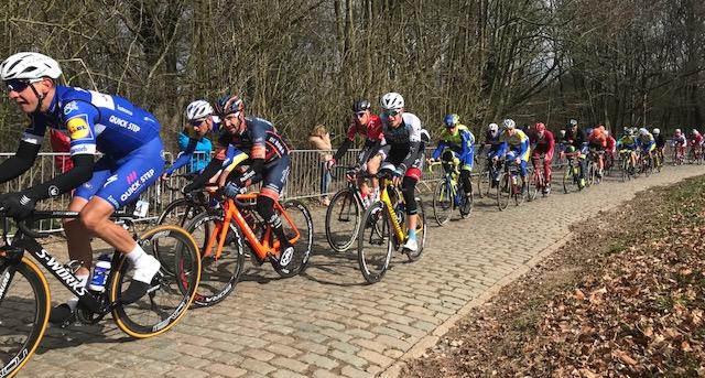 BiciSport in Flanders @ 21 Mar - the De Panne Classic peloton climbing the cobbled Kemmelberg