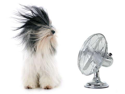 Keep Cool in a Pet Friendly Apartment While Saving Money this Summer