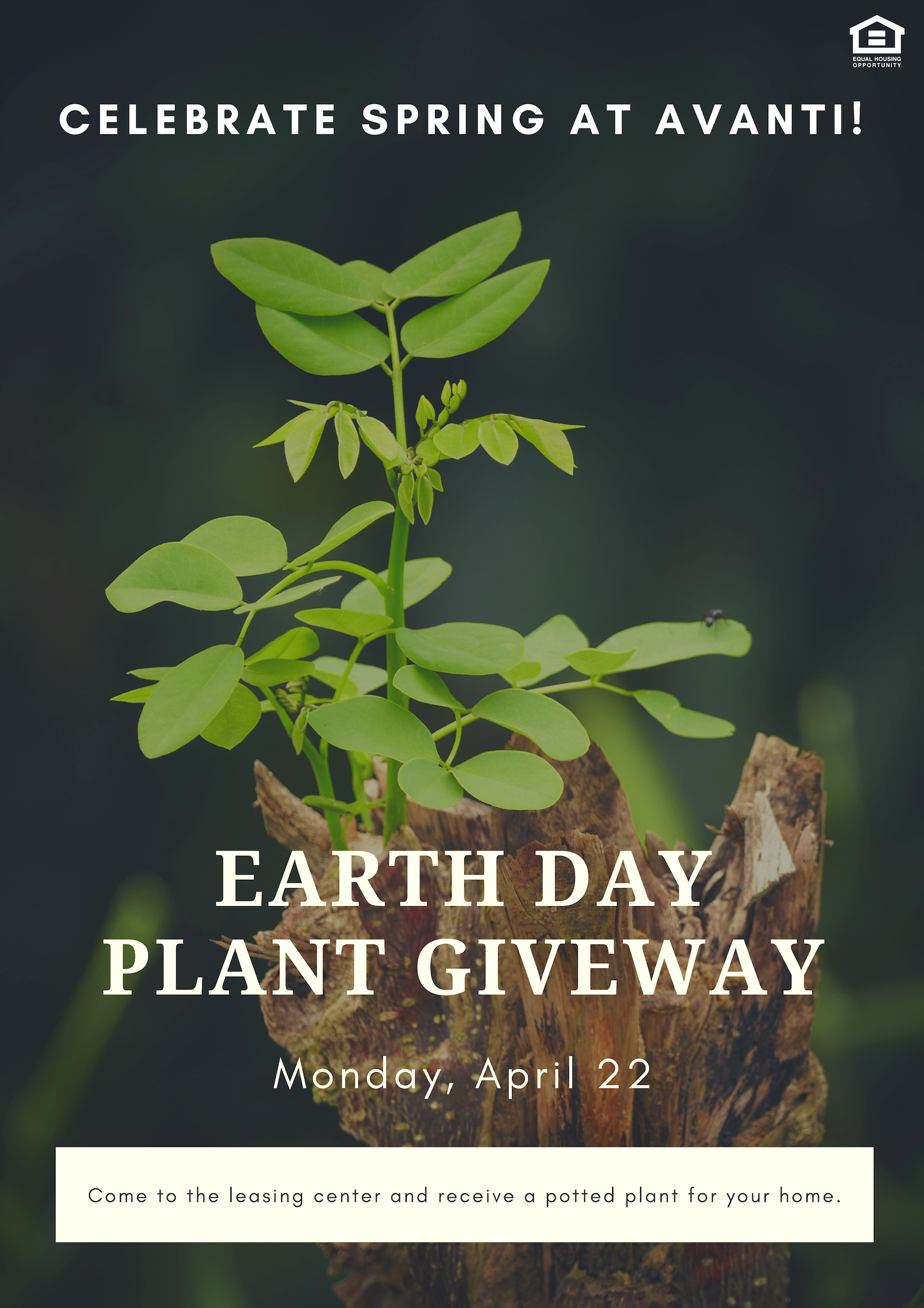 Earth Day Plant Giveaway at Avanti