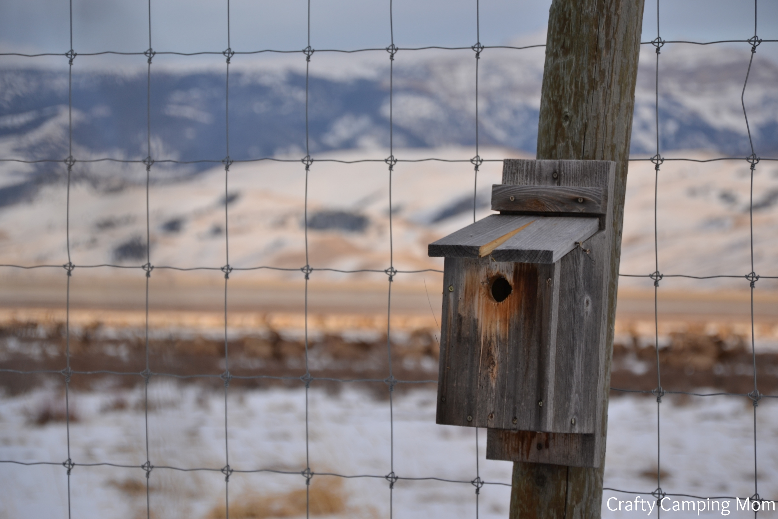 Bird house, Wyoming