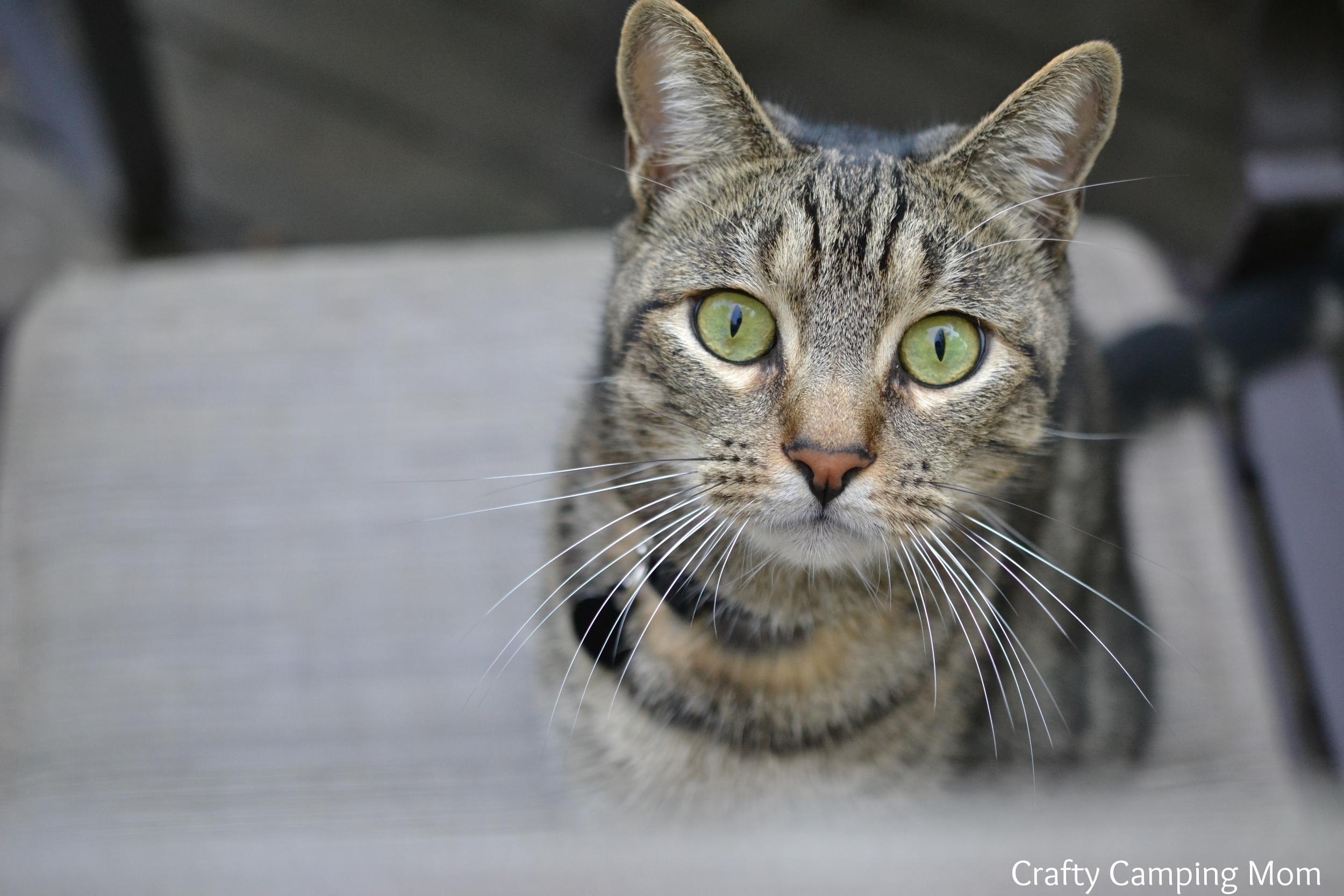 Curious Charlie Cat