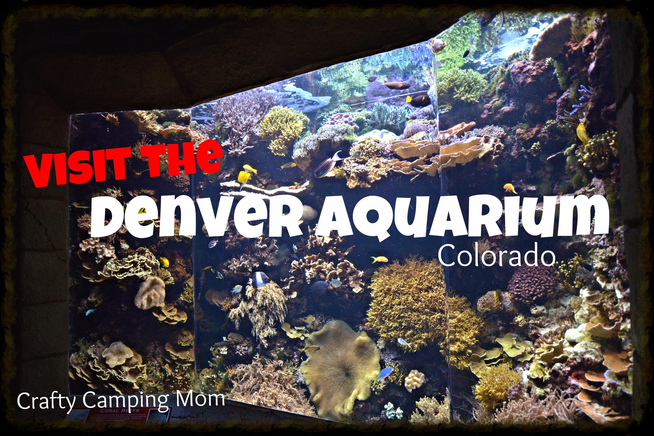Denver Aquarium Tank