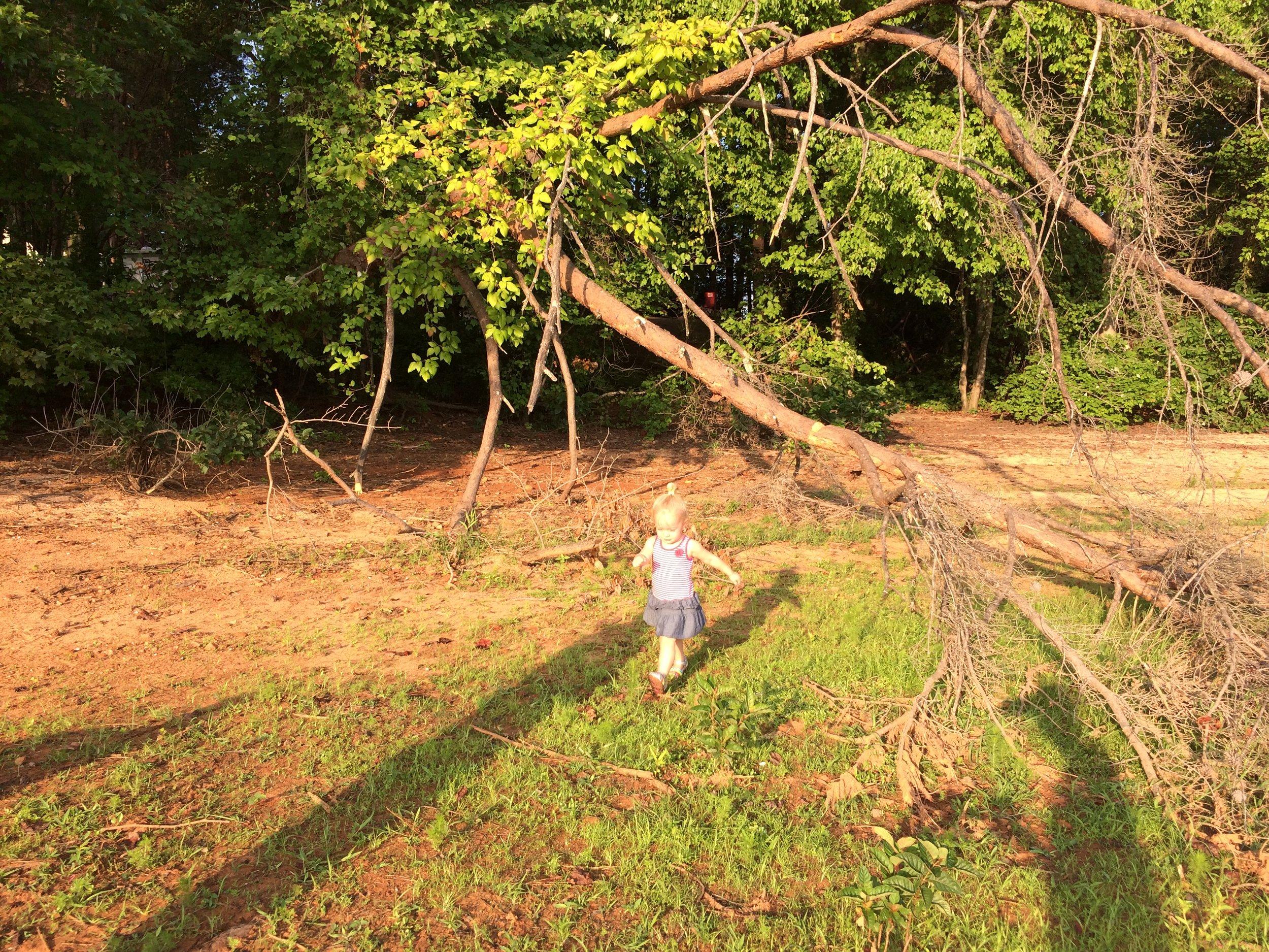 Peach 1 enjoying a morning stroll