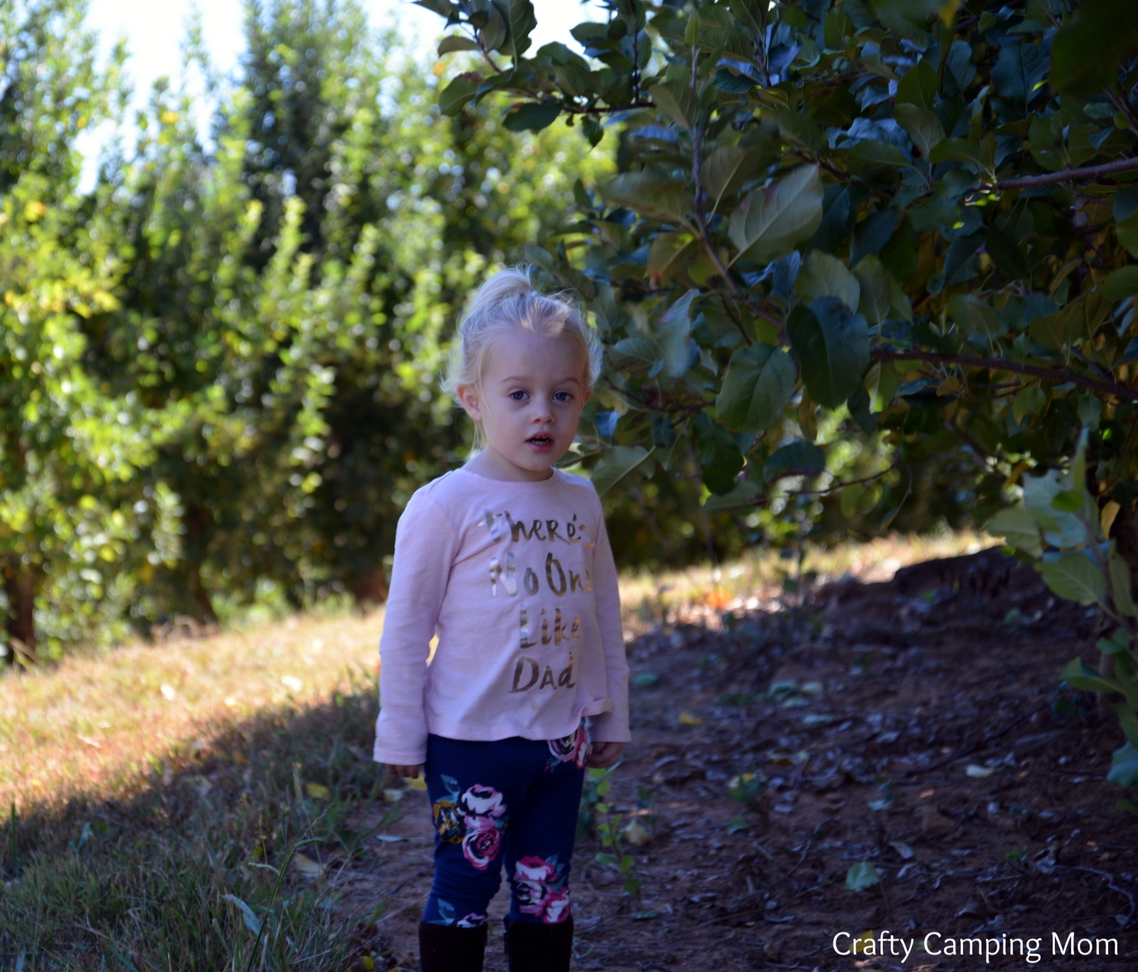 Peach 1 in the apple trees