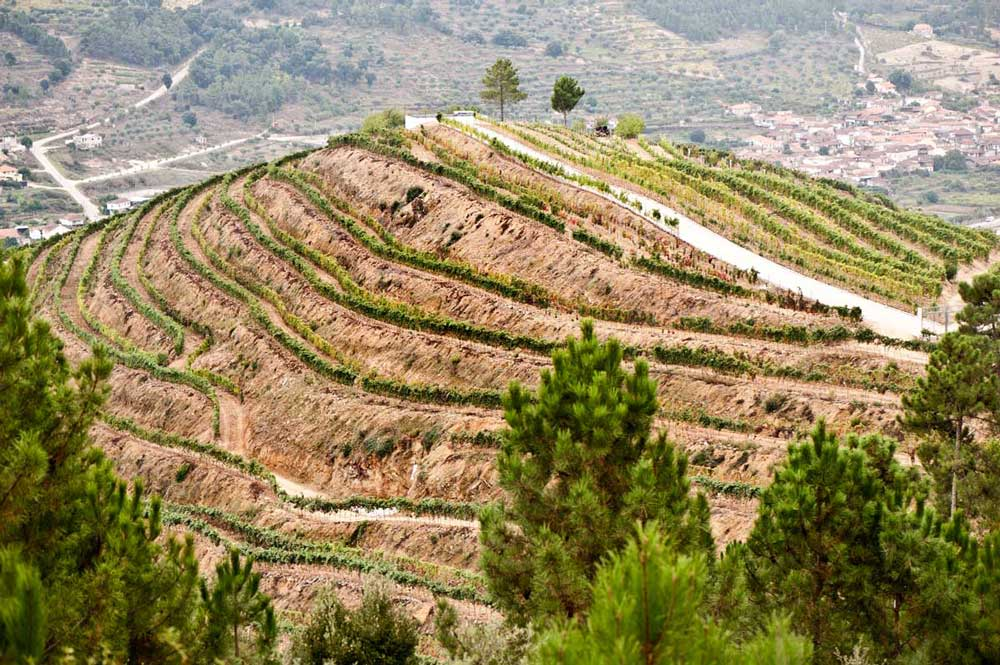 The traditional terracing of the hillside vineyard offers greater sun exposure to the hot-weather-friendly grape varietals. (Image copyright Penada Wines)