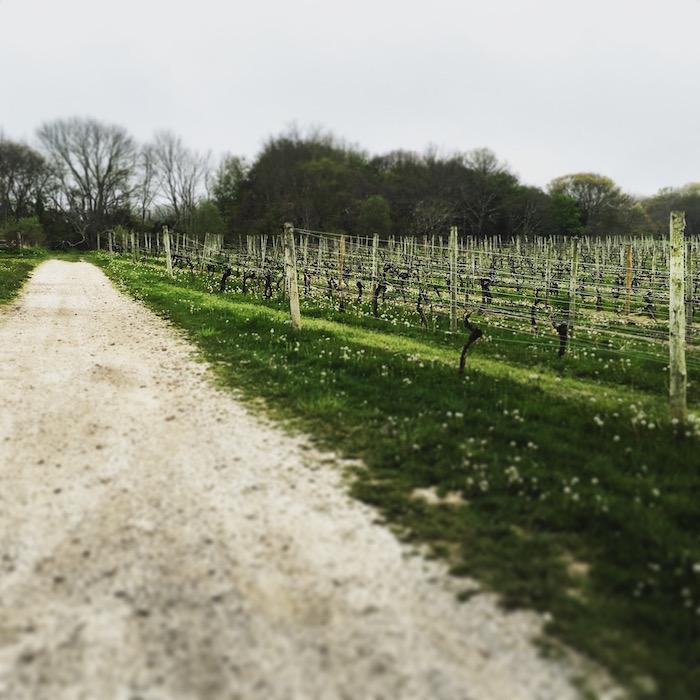 The Vineyard at Westport Rivers