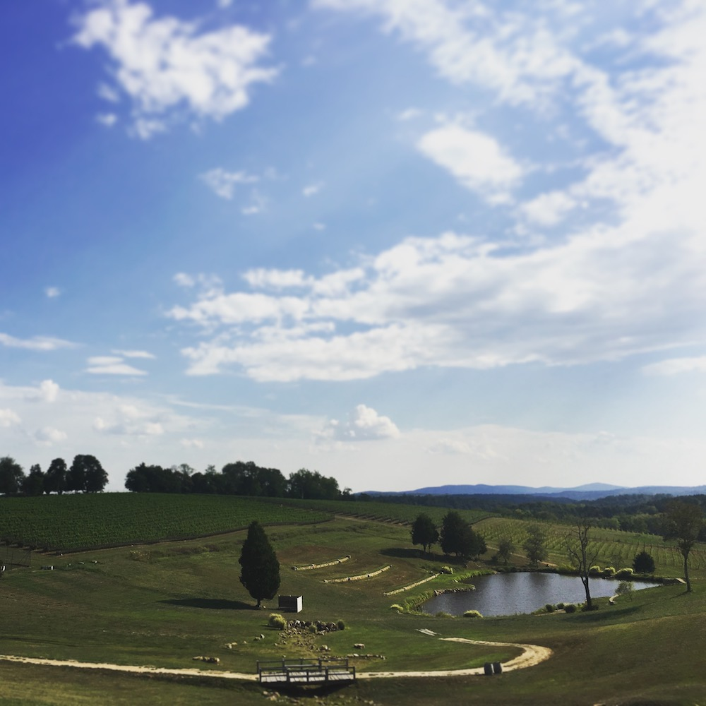 The Vineyard at Stone Tower Winery