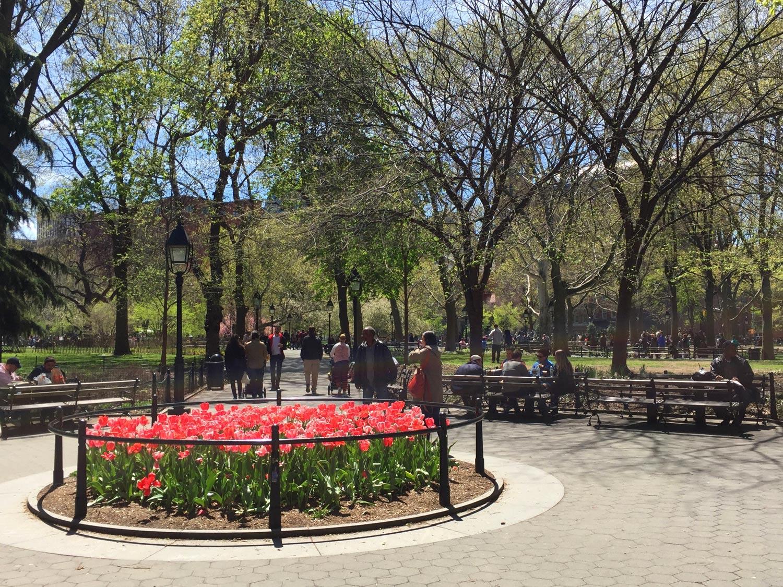 Pink-Tulips-Washington-Sqaure-Park-New-York.jpg
