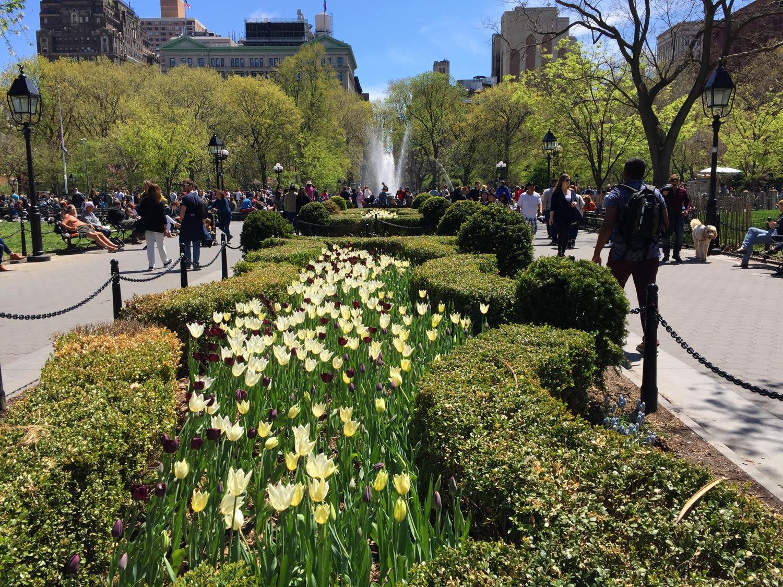 Tulips-blooming-field-Washington-Square-Park-New-York.jpg