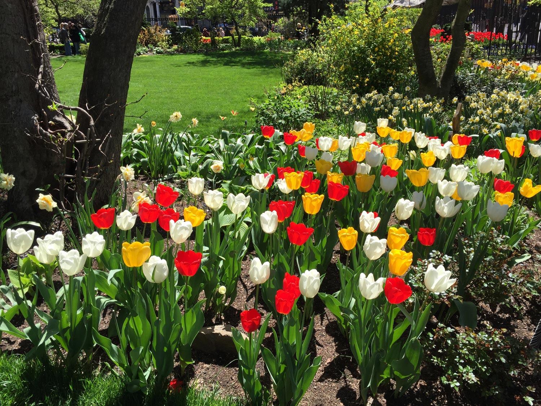 Spring-Red-White-Yellow-Tulips-New-York-City.jpg
