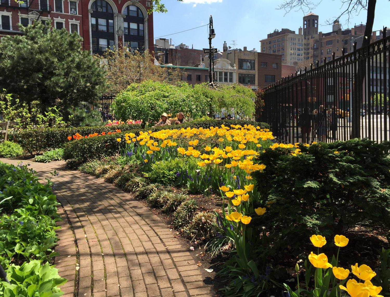 Spring-Yellow-Tulips-Jefferson-Market-Garden-New-York-City.jpg