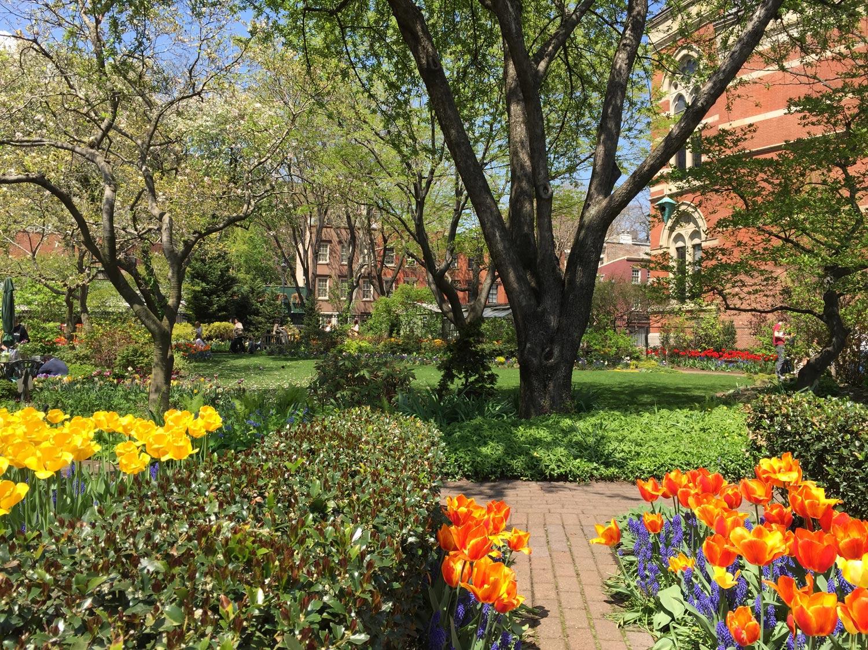 Tulips-Blooms-Jefferson-Market-Garden-New-York-City.jpg