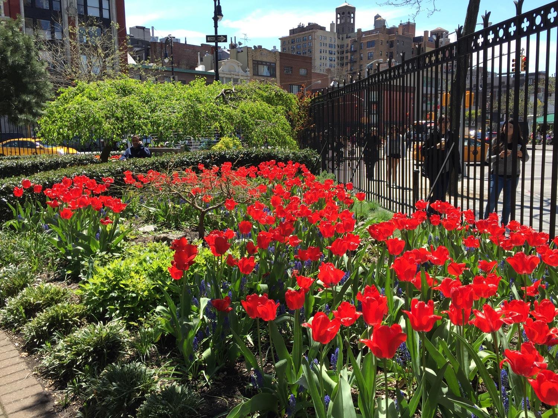 Red-Tulips-Jefferson-Market-Garden-New-York-City.jpg
