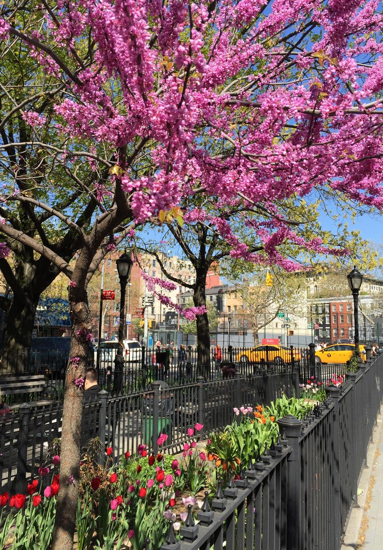 Greenstreets-West-Houston-Spring-Garden-New-York-City.JPG