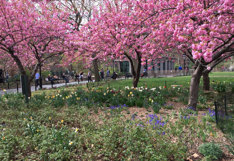 Cherry-Trees-Washington-Square-Park-Spring-New-York-City-2.jpg