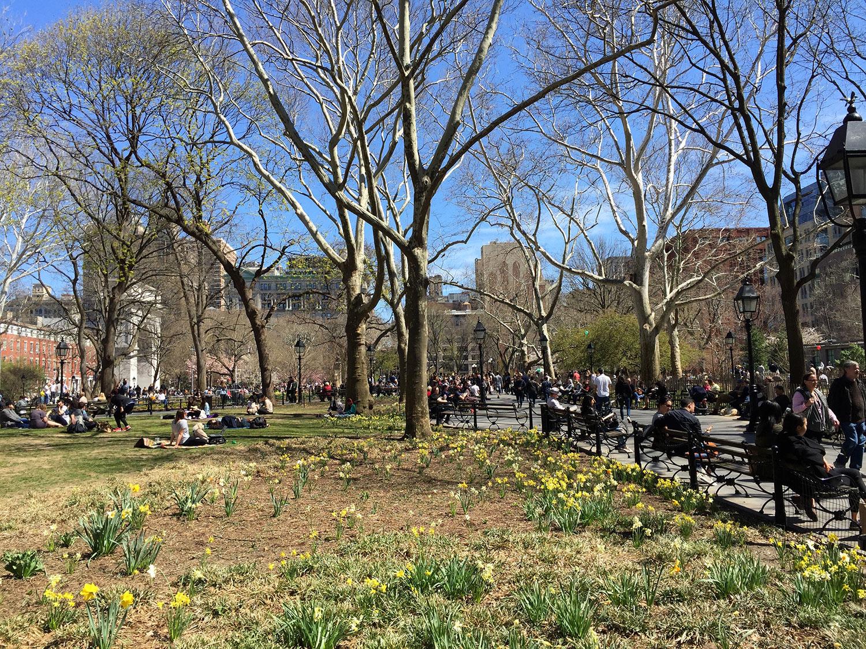 Washington-Square-Park-New-York-City-Daffodils-April.jpg