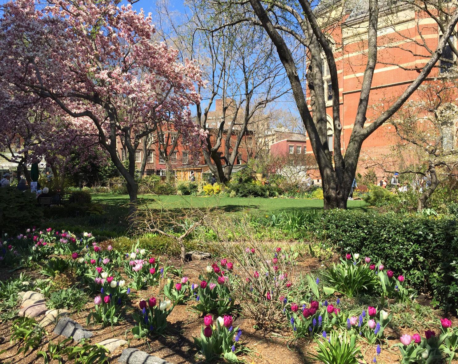 Jefferson-Market-Garden-Pink-Burgundy-Tulips-Spring.jpg