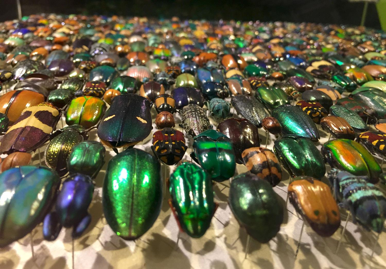 Montreal-Botanical-Garden-Insectarium-Colorful-Beetles.jpg