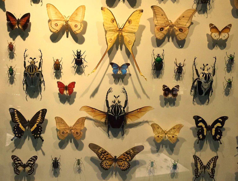 Montreal-Botanical-Garden-Insectarium-Display-1.jpg