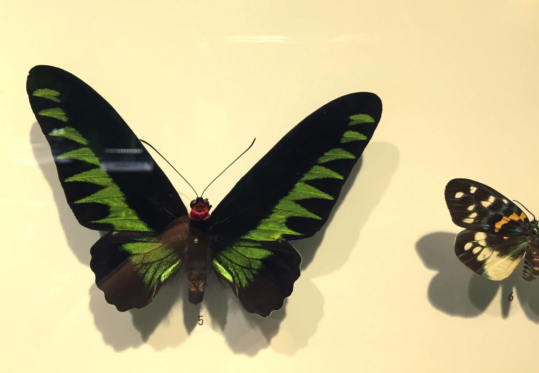 Montreal-Botanical-Garden-Insectarium-Butterflies.jpg