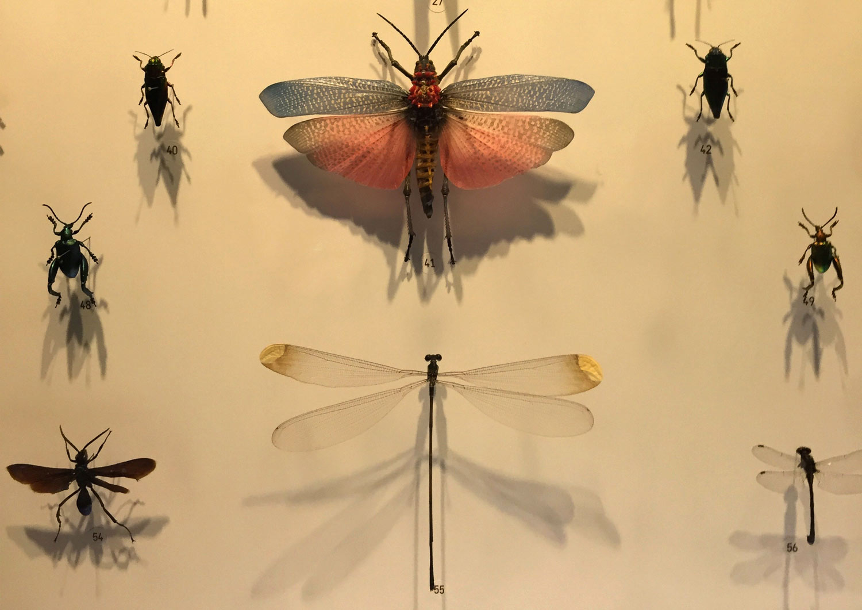 Montreal-Botanical-Garden-Insectarium-Dragonfly-1.jpg