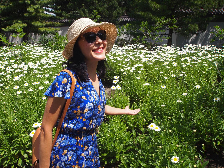Montreal-Botanical-Garden-Chinese-Garden-Chamomile-Flower-Field-1.jpg
