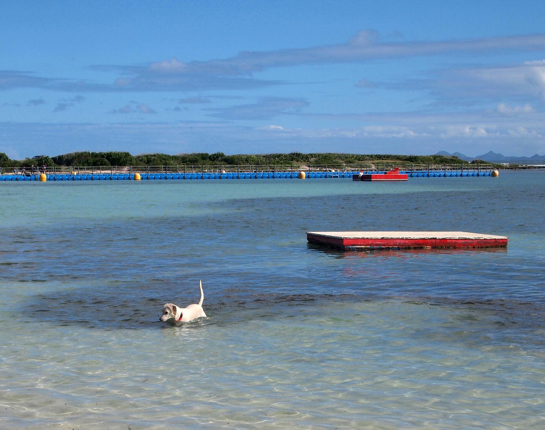 Saint-Martin-Le-Galion-beach-before-Irma.jpg