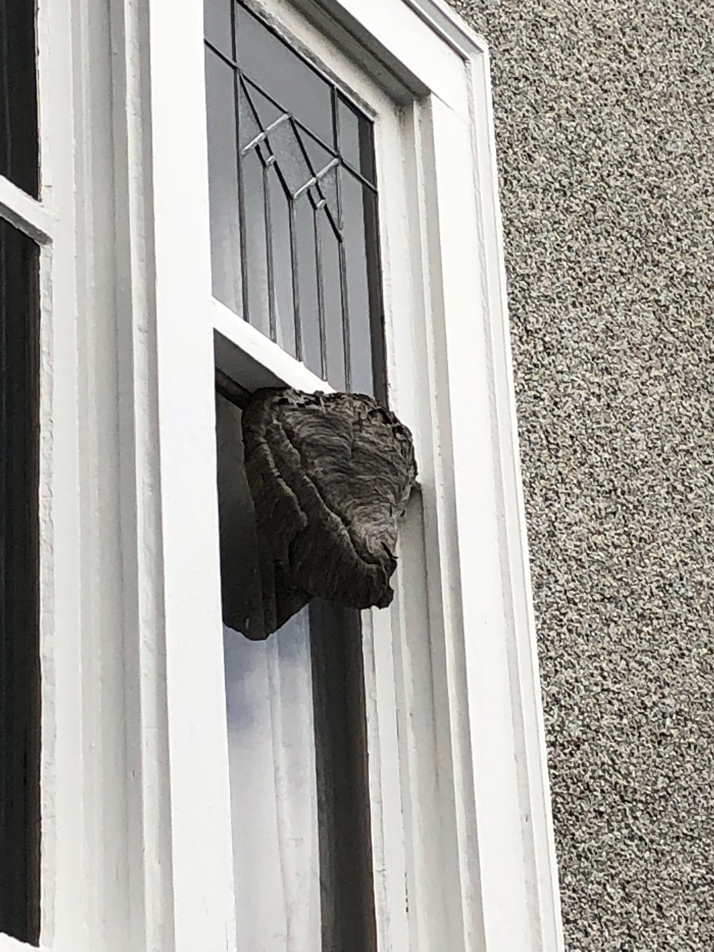 Very interesting place for a wasp nest, even more interesting is that the owners didn't notice.