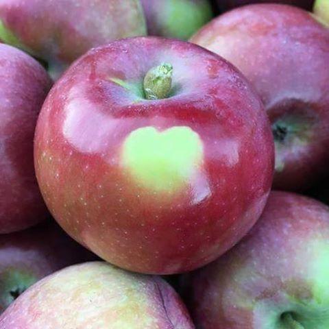 Heart_Apple