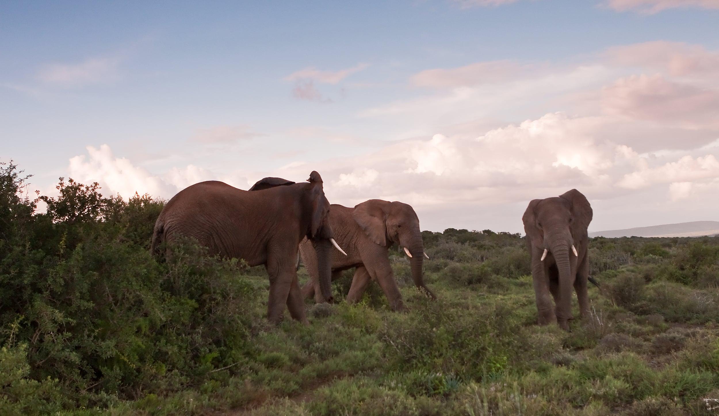 Three elephants.jpg