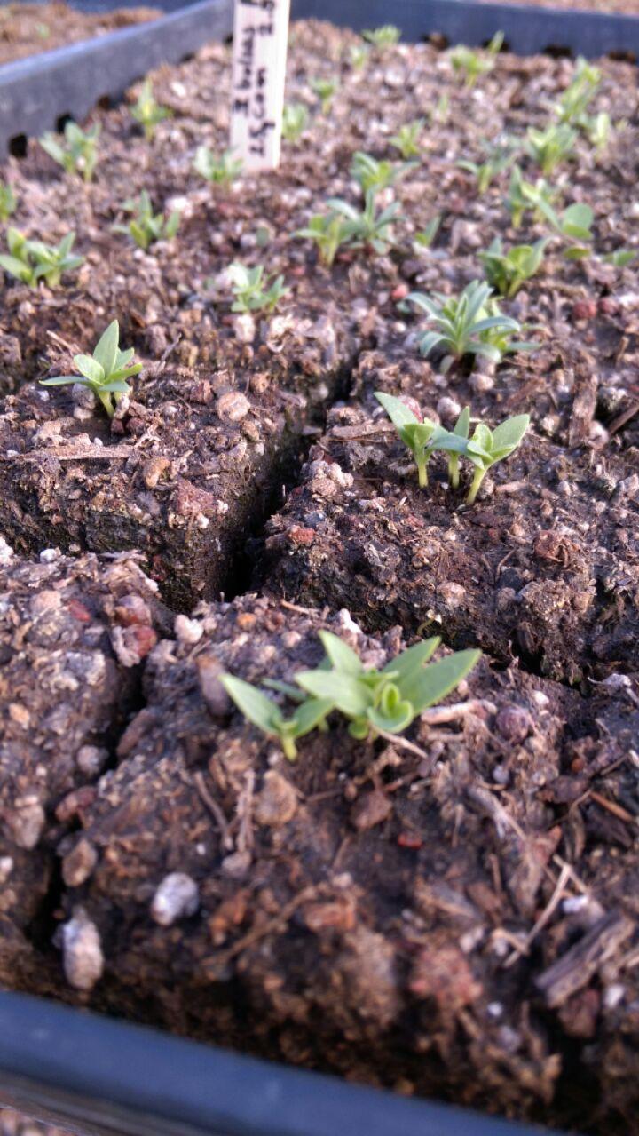 Seed Blocks