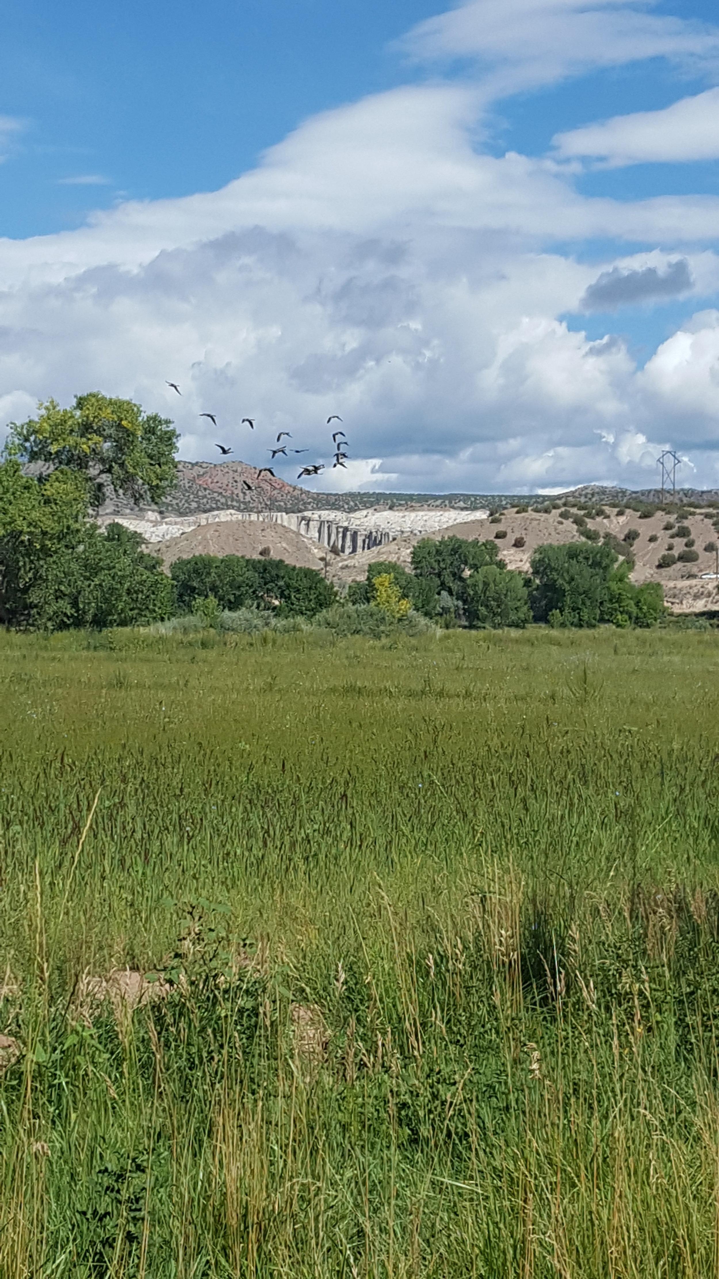 Forage grasses and Plaza Blanca on the horizon
