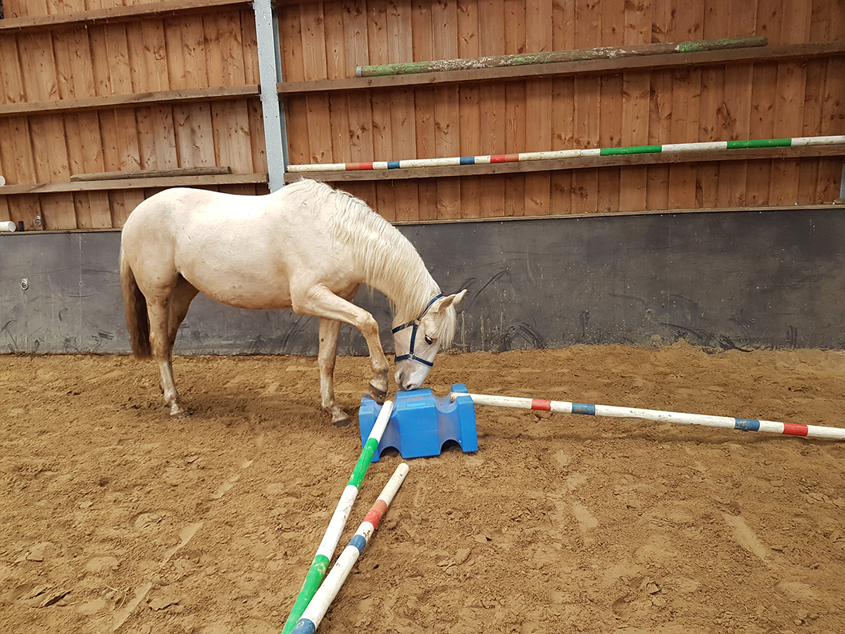 Leren omgaan met obstakels op de grond en het over balkjes stappen