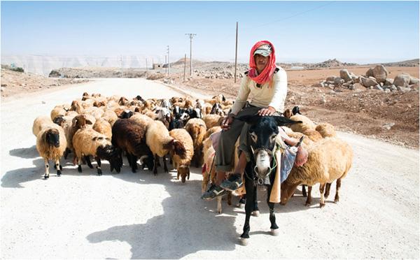 sheep-or-goat.jpg