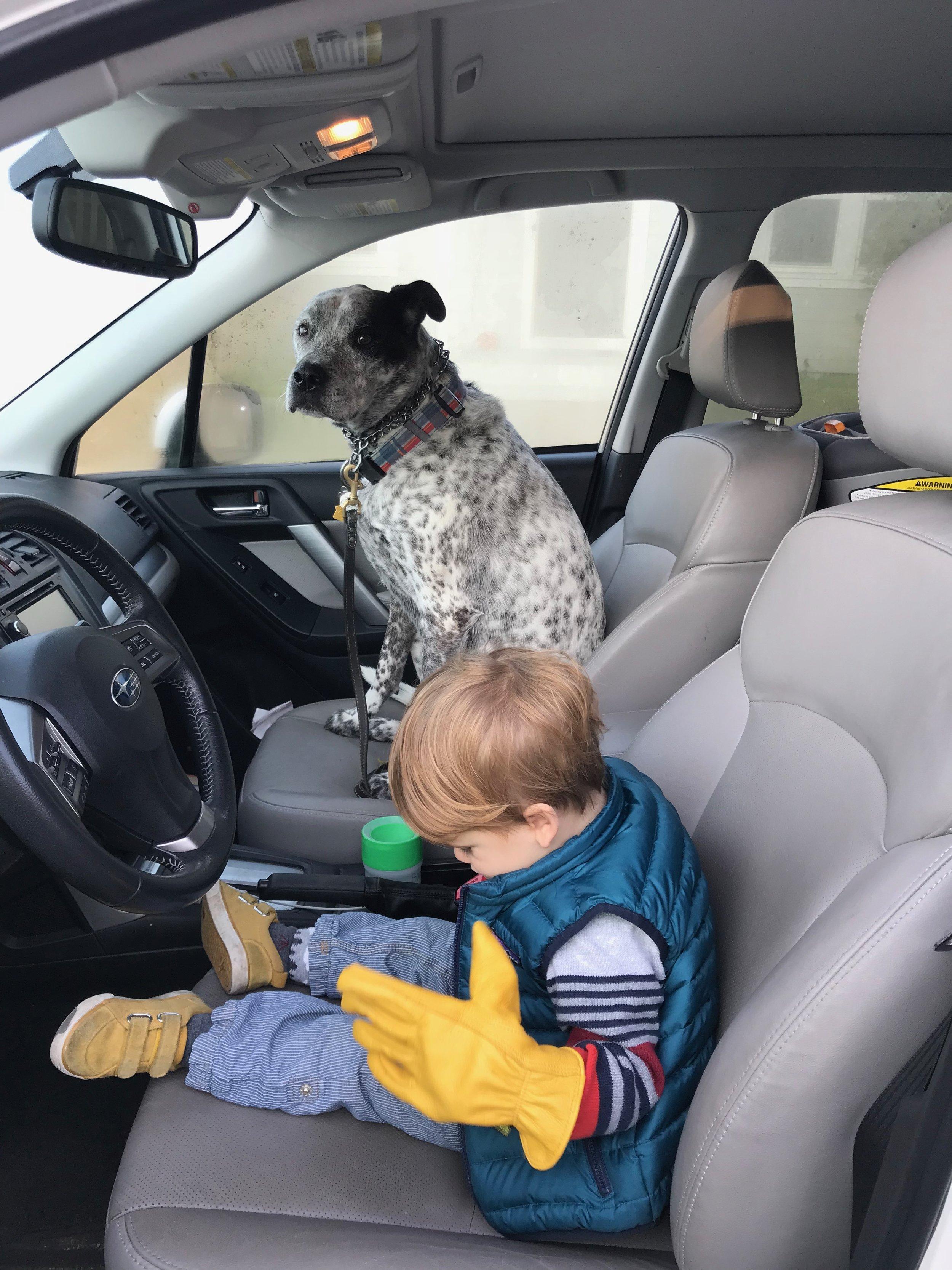 Please don't let him drive!!
