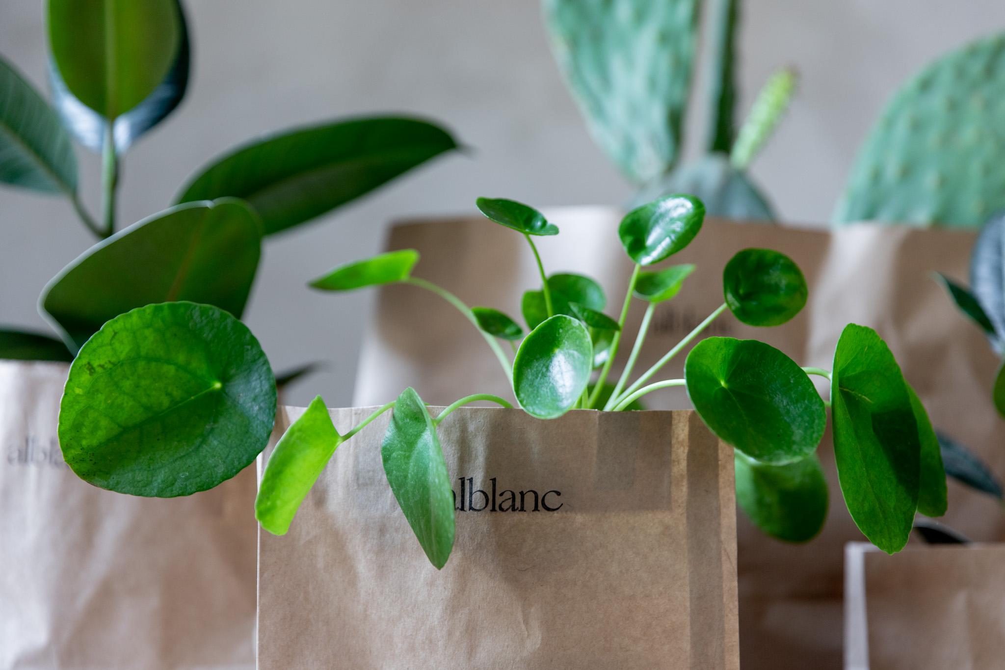 plantas pinterest.jpg