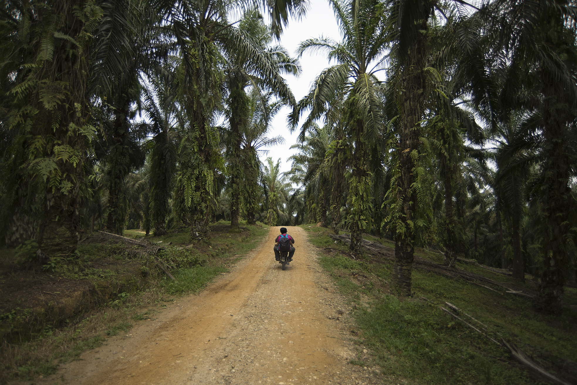 Our main mode of transportation through the palm plantations.