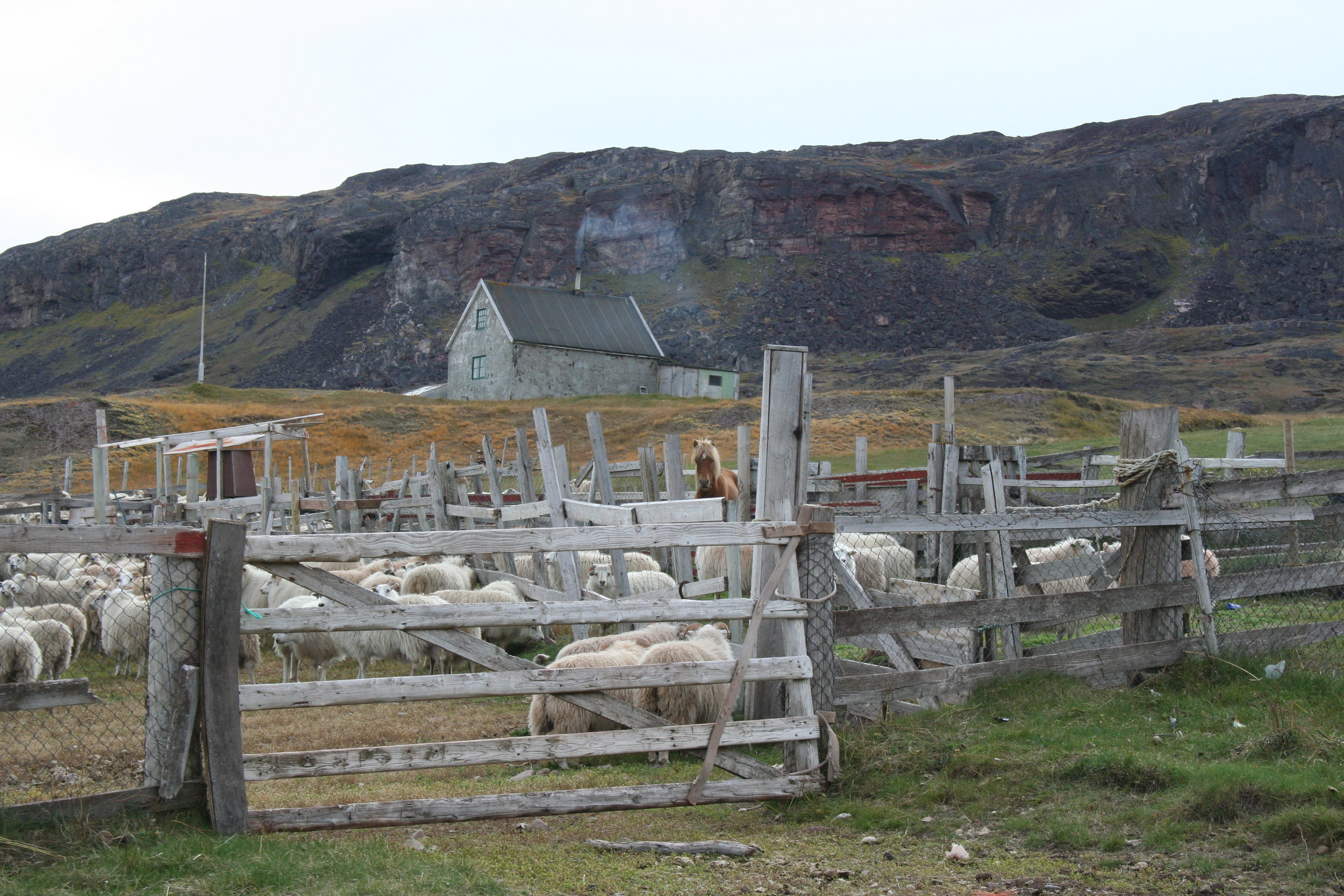 Kujataa Greenland World Heritage Site, Greenland (Denmark) - Ongoing sheep farming is essential to maintain the traditional Norse and Greenlandic landscape and the local economy          © Christophe Rivet