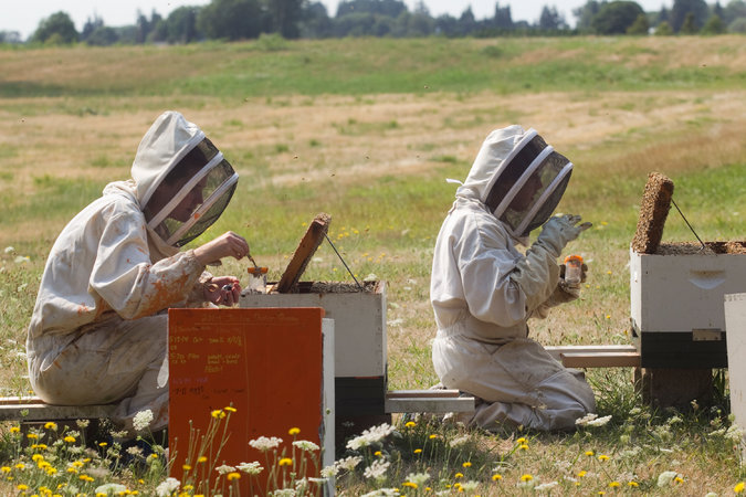 Local New York State beekeepers that supply honey to Don Sausser Apiaries.