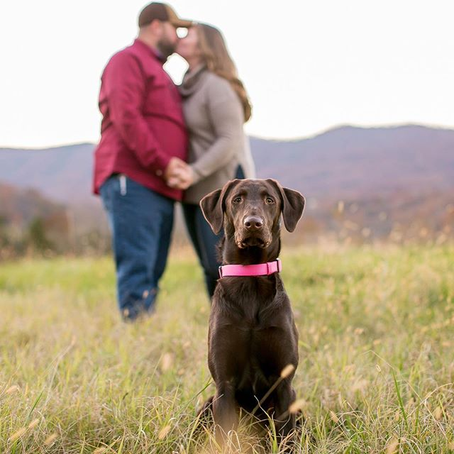 Have I ever mentioned how much I love when my couples bring their puppers to their engagement sessions? Or how much I just love dogs in general?! Haha! Hazel was the goodest girl there ever was during this perfect Fall day and I couldn't be more obsessed! I think I'll start requiring my couples to bring a dog, even if it means going to the shelter before their session to adopt, I mean borrow, a pup for their pics 😉 #sorryhubbies #doglovingphotographer #wildandwonderfulphotography #dogengagement #engagementphotos #fallpictures #weddings #wvweddings #vaweddings #vaweddingphotographer #wvweddingphotographer