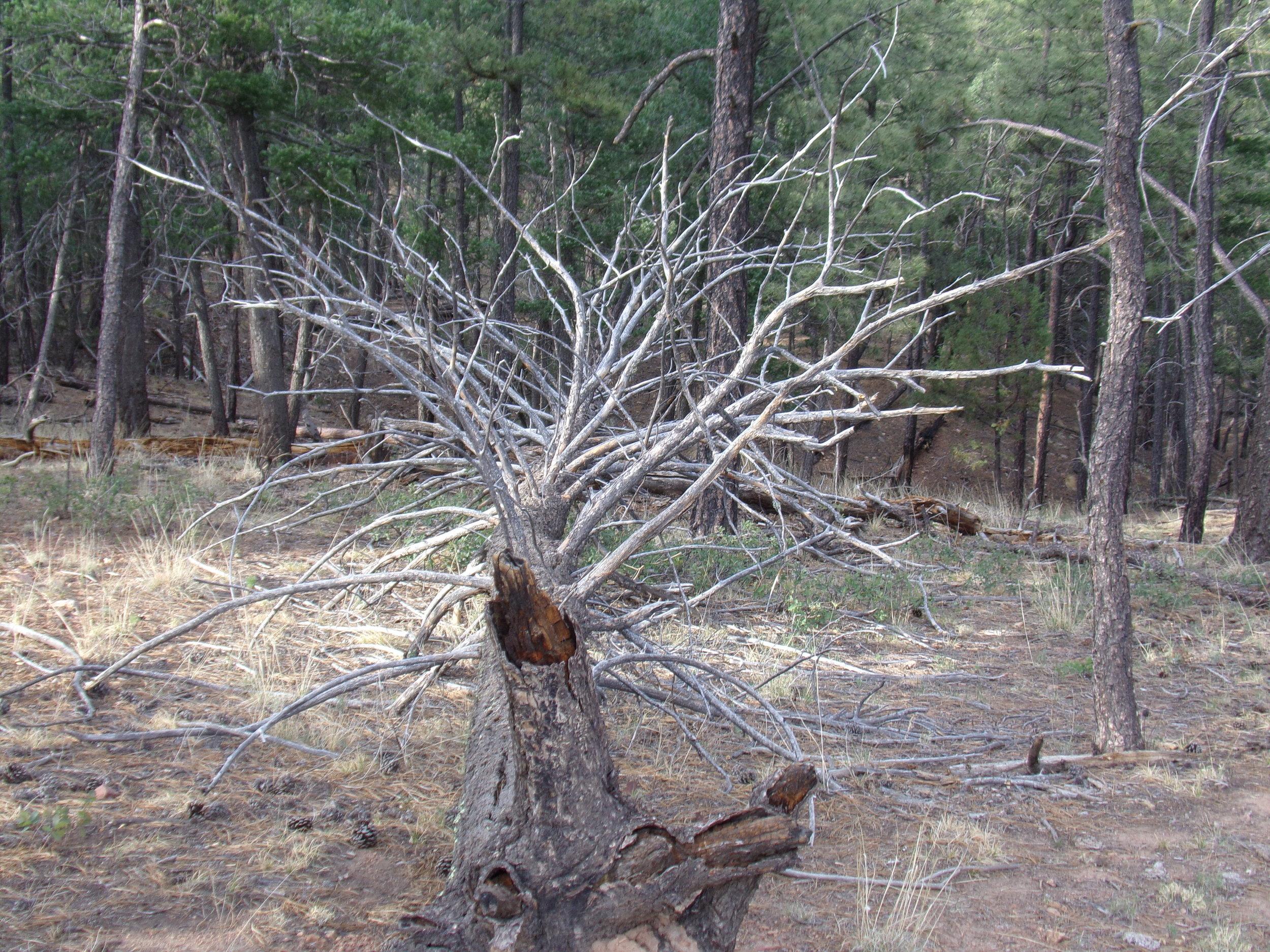 Funky Dead Tree