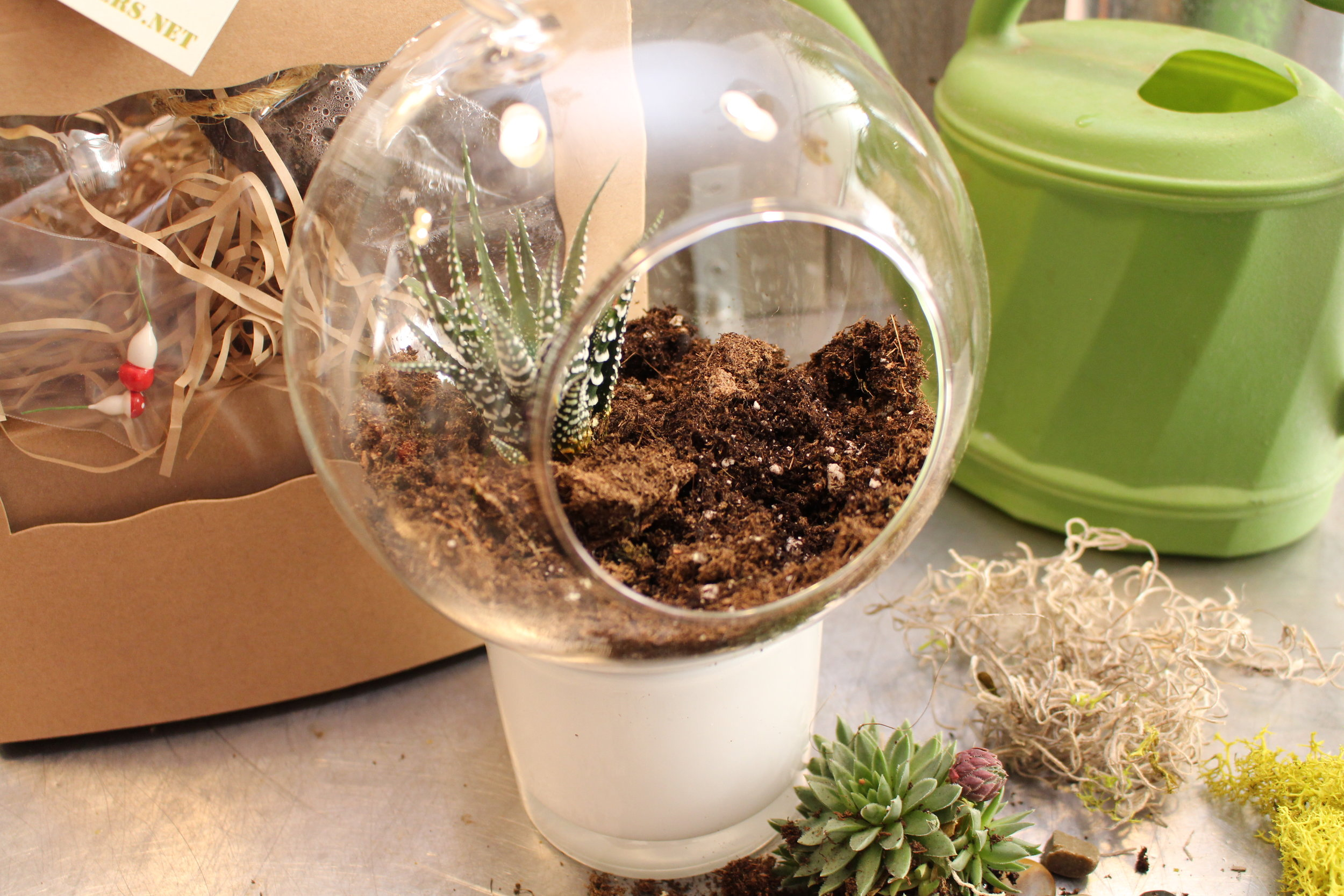Shake off the extra soil from your succulents roots and carefully nestle them into your soil.