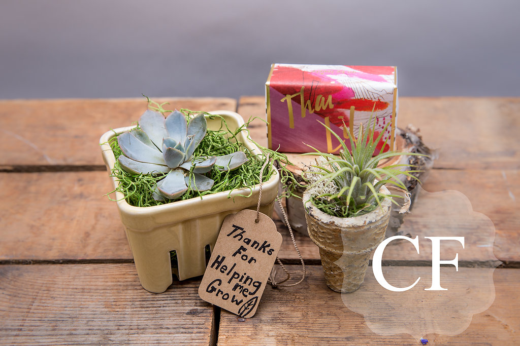From left to right: Succulents $12-$22, soaps $8-$13, ice cream airplant $20