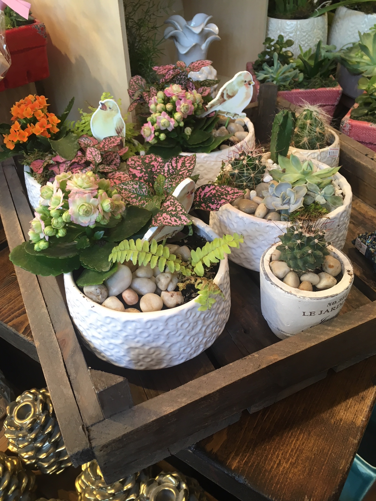 Small Dish Garden - We have an assortment of prearranged gardens from $14-$50. The one pictured here is $33