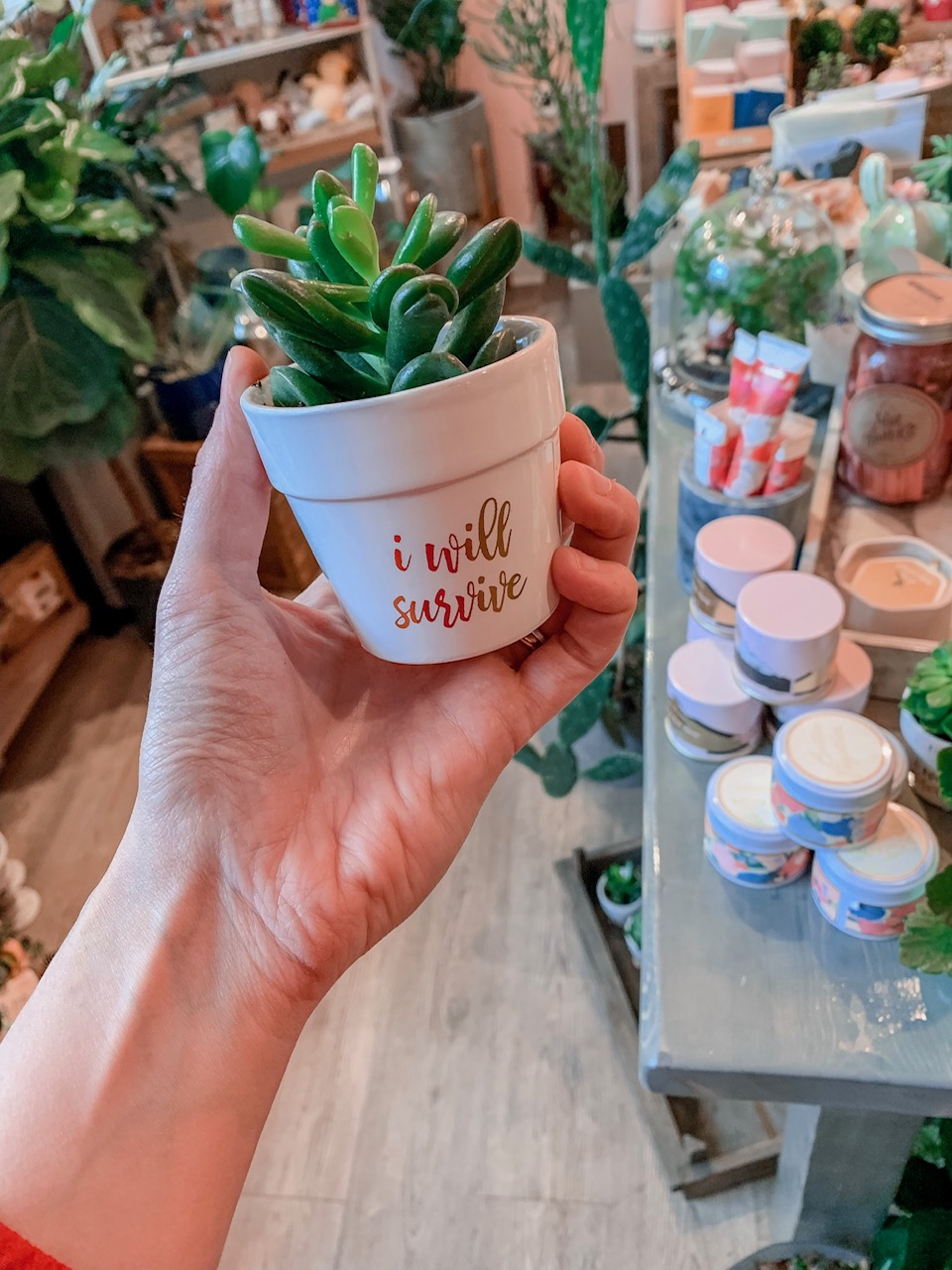 Quirky Plants - $14
